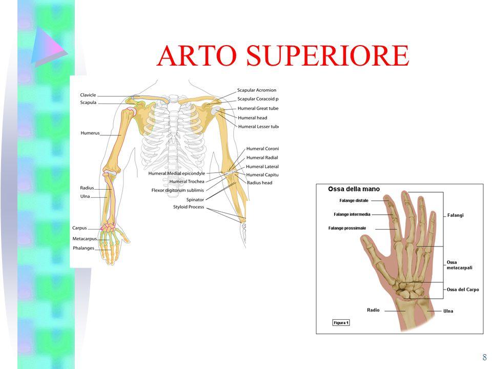 ARTO SUPERIORE 8