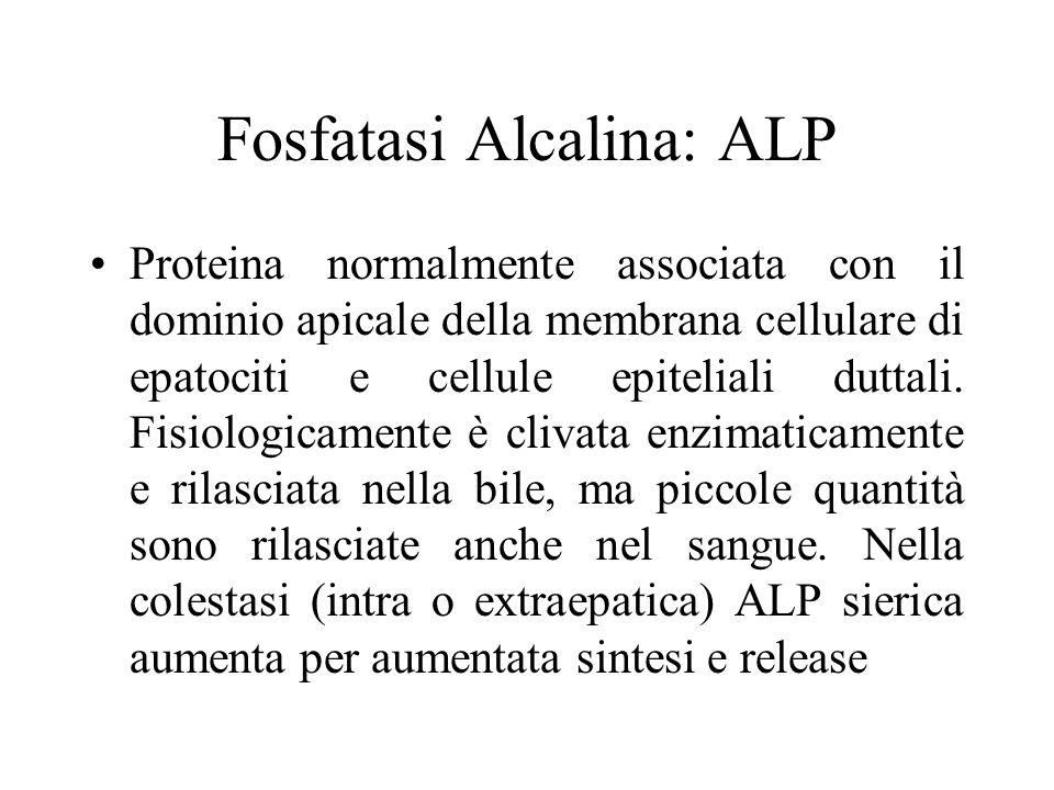 Fosfatasi Alcalina: ALP Proteina normalmente associata con il dominio apicale della membrana cellulare di epatociti e cellule epiteliali duttali. Fisi