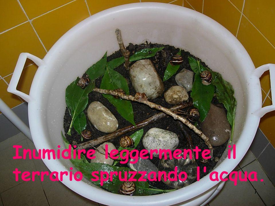 Inumidire leggermente il terrario spruzzando l'acqua.