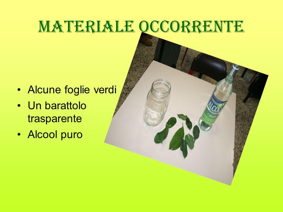 Materiale occorrente Alcune foglie verdi Un barattolo trasparente Alcool puro
