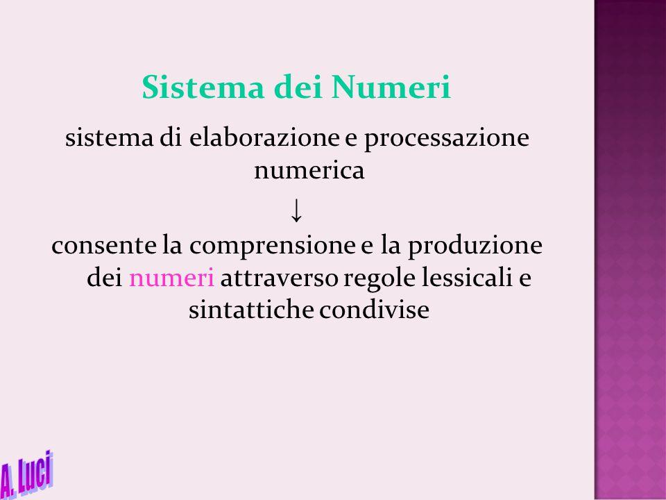 Sistema dei Numeri sistema di elaborazione e processazione numerica ↓ consente la comprensione e la produzione dei numeri attraverso regole lessicali