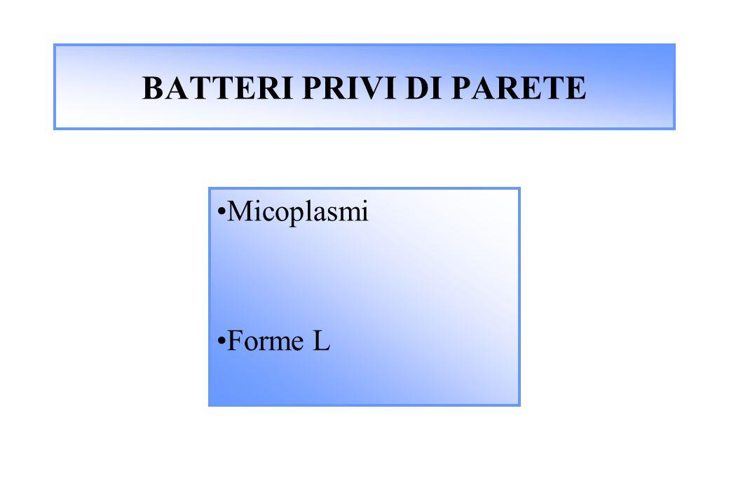 BATTERI PRIVI DI PARETE Micoplasmi Forme L