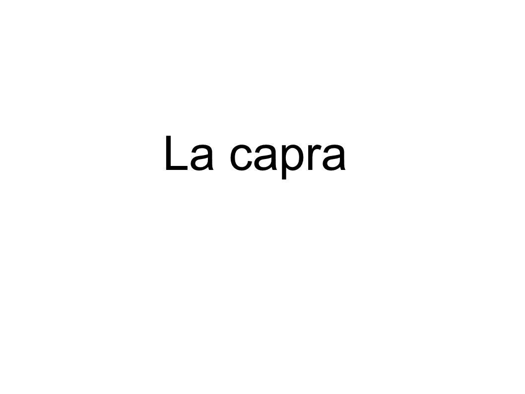I temi Primo tema : la capra Campo semantico della capra: