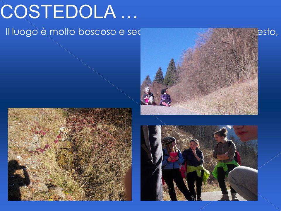 COSTEDOLA … Il luogo è molto boscoso e secco … ma, nonostante questo, si possono osservare vari ruscelli.