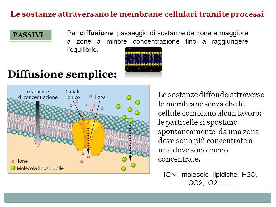 Diffusione semplice: Le sostanze diffondo attraverso le membrane senza che le cellule compiano alcun lavoro: le particelle si spostano spontaneamente