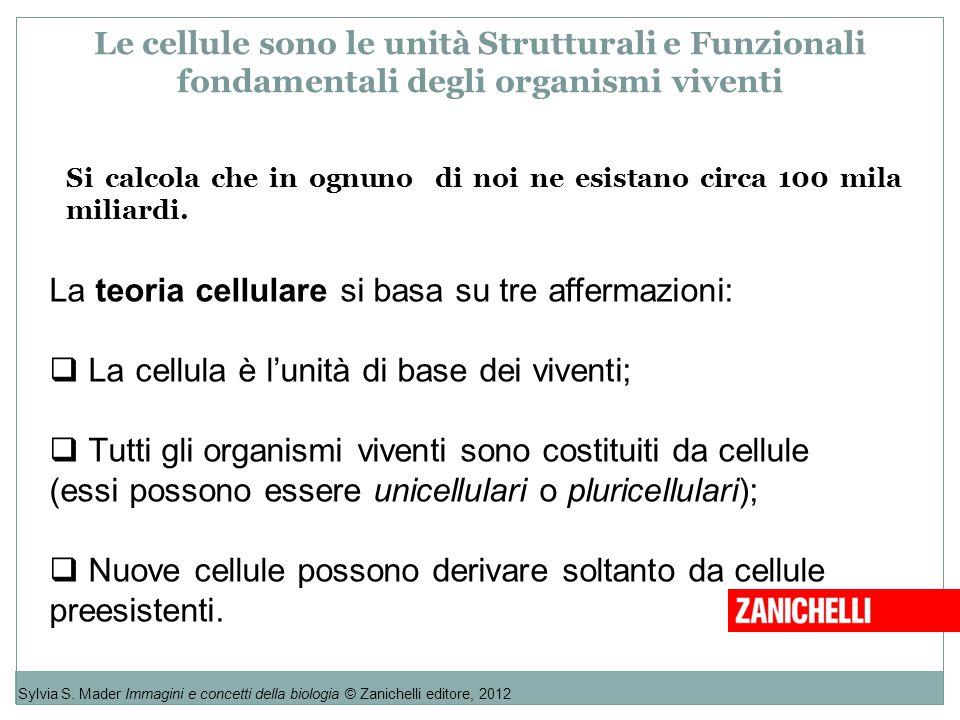 Le cellule sono le unità Strutturali e Funzionali fondamentali degli organismi viventi Sylvia S. Mader Immagini e concetti della biologia © Zanichelli