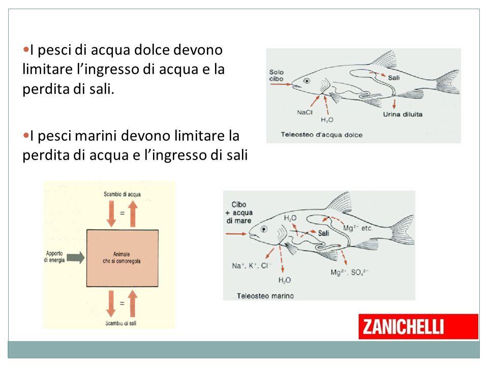 I pesci di acqua dolce devono limitare l'ingresso di acqua e la perdita di sali. I pesci marini devono limitare la perdita di acqua e l'ingresso di sa