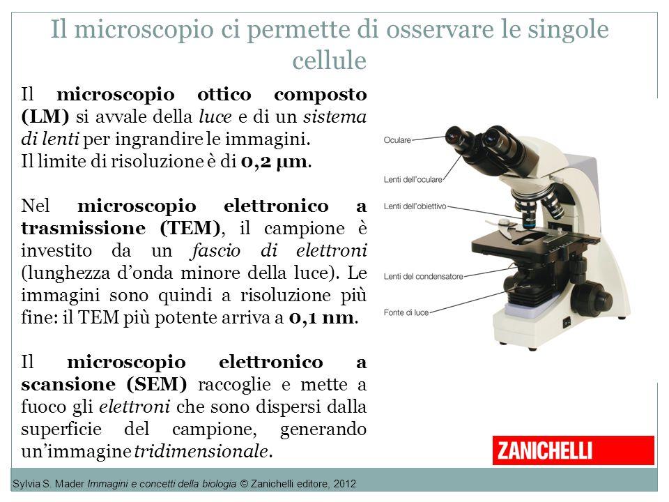 Il microscopio ci permette di osservare le singole cellule Sylvia S. Mader Immagini e concetti della biologia © Zanichelli editore, 2012 Il microscopi