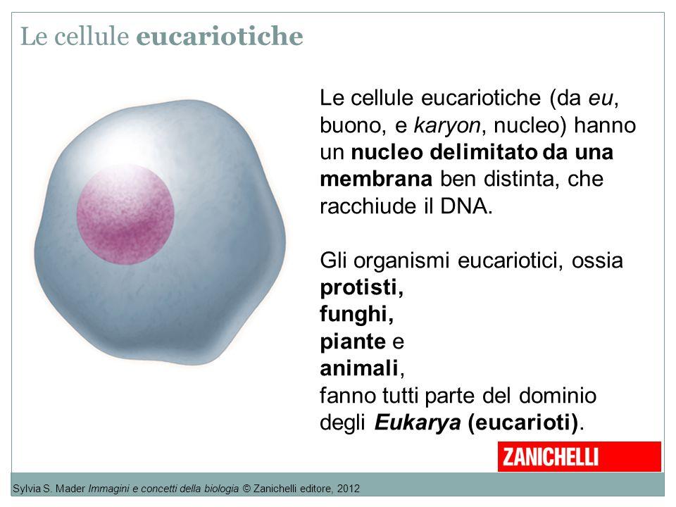 Le cellule eucariotiche Sylvia S. Mader Immagini e concetti della biologia © Zanichelli editore, 2012 Le cellule eucariotiche (da eu, buono, e karyon,