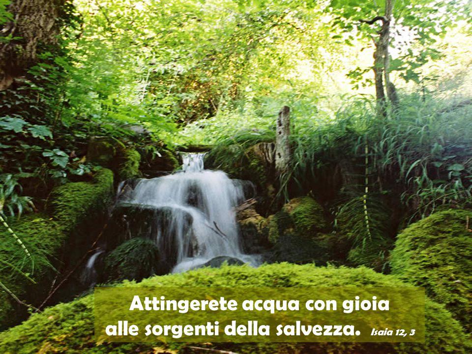 Attingerete acqua con gioia alle sorgenti della salvezza. Isaia 12, 3