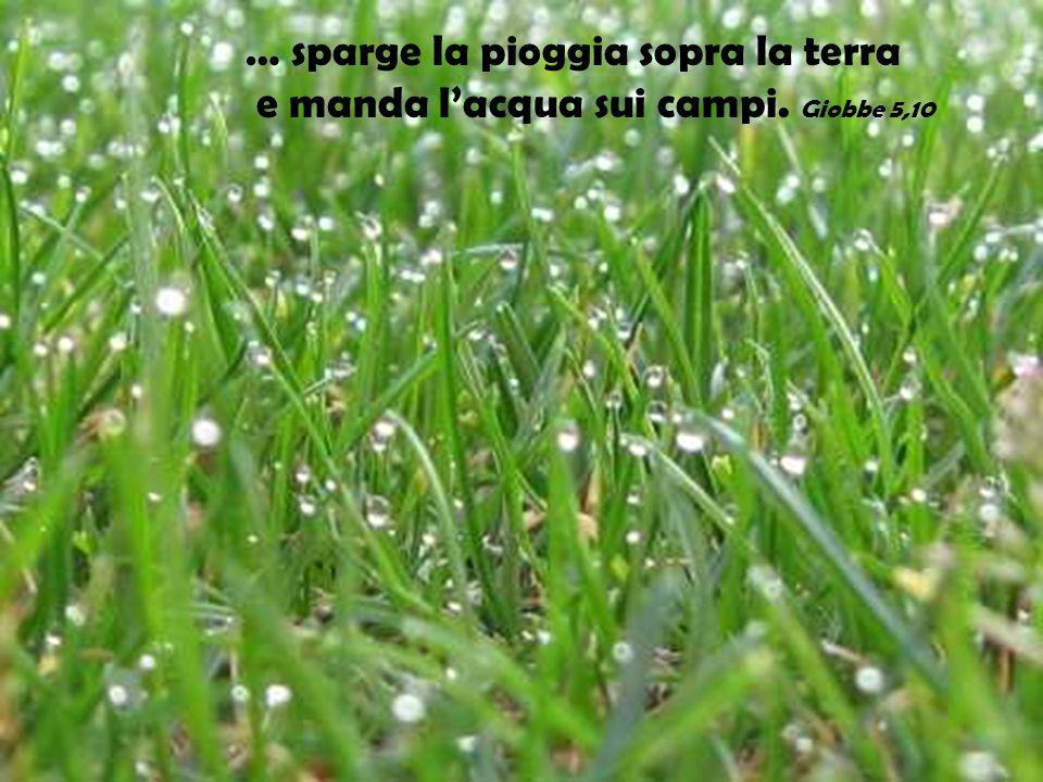 … sparge la pioggia sopra la terra e manda l'acqua sui campi. Giobbe 5,10