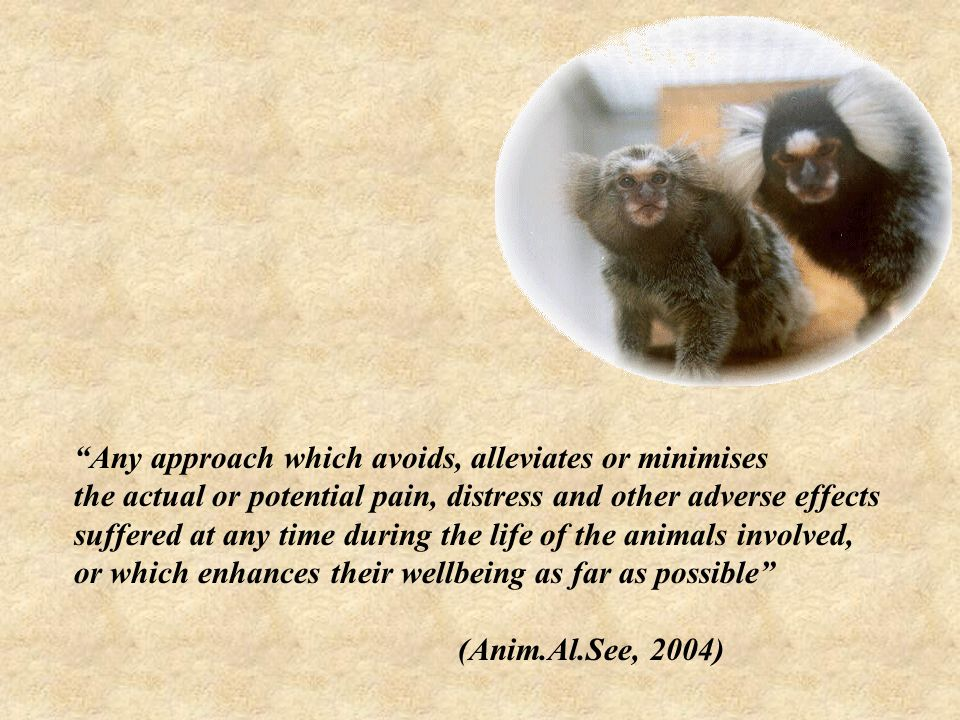 Any approach which avoids, alleviates or minimises the actual or potential pain, distress and other adverse effects suffered at any time during the life of the animals involved, or which enhances their wellbeing as far as possible (Anim.Al.See, 2004)