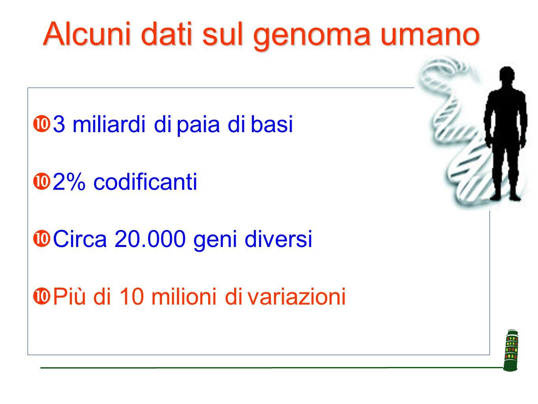 Alcuni dati sul genoma umano  3 miliardi di paia di basi  2% codificanti  Circa 20.000 geni diversi  Più di 10 milioni di variazioni