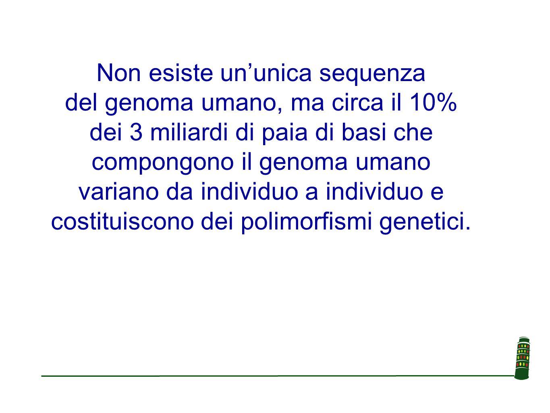 Non esiste un'unica sequenza del genoma umano, ma circa il 10% dei 3 miliardi di paia di basi che compongono il genoma umano variano da individuo a in
