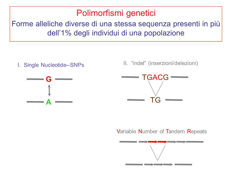 "I. Single Nucleotide--SNPs G A II. ""indel"" (inserzioni/delezioni) TGACG TG Variable Number of Tandem Repeats Polimorfismi genetici Forme alleliche div"