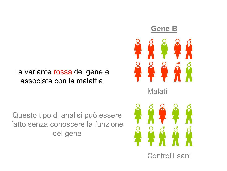Gene B Malati Controlli sani La variante rossa del gene è associata con la malattia Questo tipo di analisi può essere fatto senza conoscere la funzion