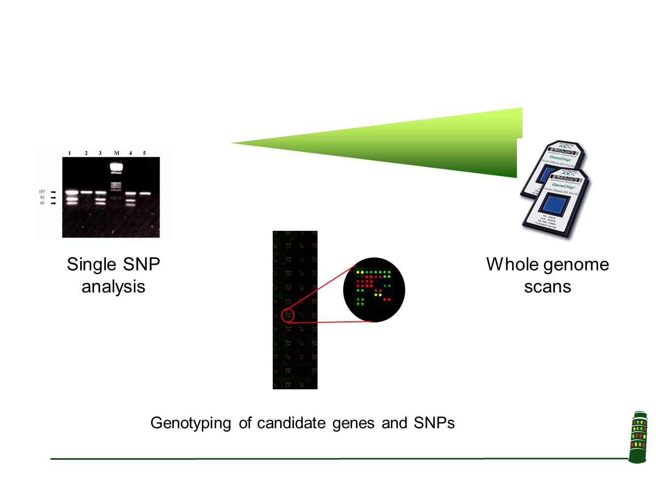 Whole genome scans Single SNP analysis Genotyping of candidate genes and SNPs