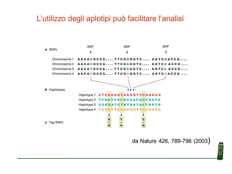 da Nature 426, 789-796 (2003 ) L'utilizzo degli aplotipi può facilitare l'analisi