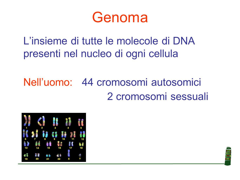 SNP (Single Nucleotide Polymorphism) Polimorfismi a singolo nucleotide ovvero cambiamenti di una base