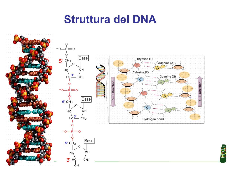 Una sequenza di DNA di 60 basi in 25 soggetti diversi