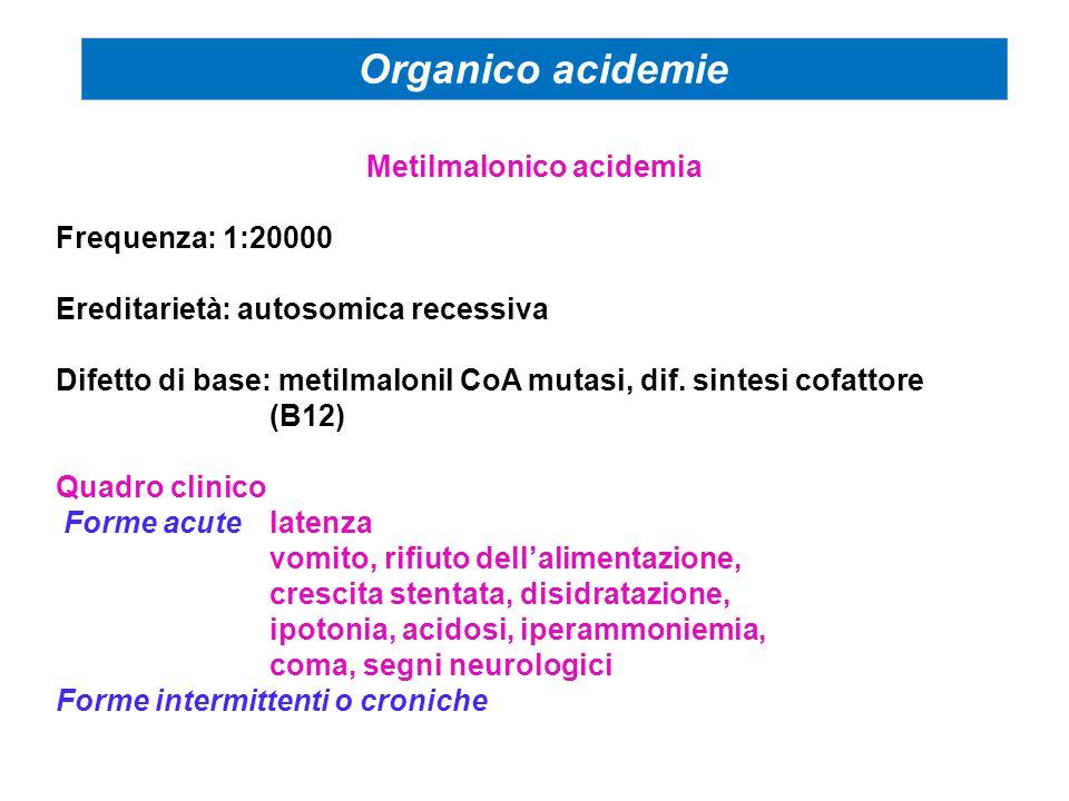 Metilmalonico acidemia Frequenza: 1:20000 Ereditarietà: autosomica recessiva Difetto di base: metilmalonil CoA mutasi, dif. sintesi cofattore (B12) Qu