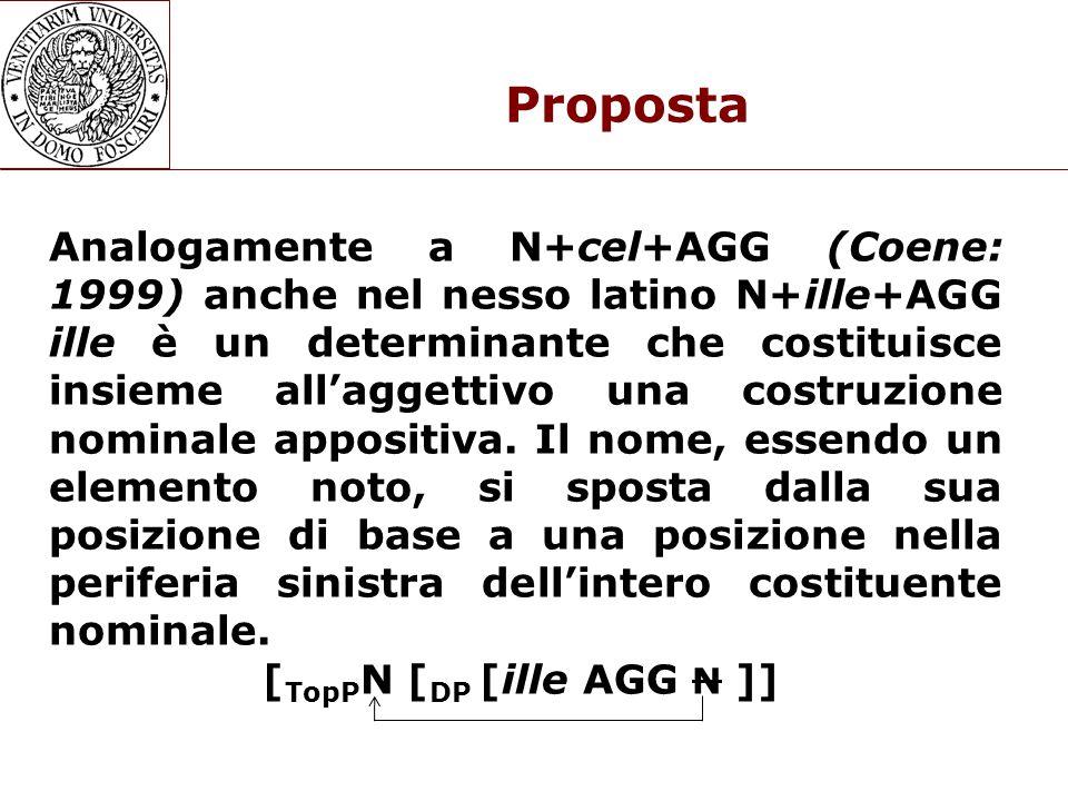 Proposta Analogamente a N+cel+AGG (Coene: 1999) anche nel nesso latino N+ille+AGG ille è un determinante che costituisce insieme all'aggettivo una costruzione nominale appositiva.
