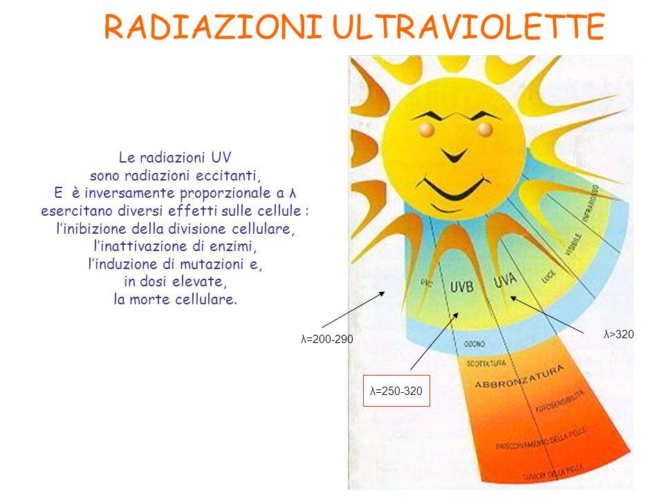RADIAZIONI ULTRAVIOLETTE Le radiazioni UV sono radiazioni eccitanti, E è inversamente proporzionale a λ esercitano diversi effetti sulle cellule : l'i