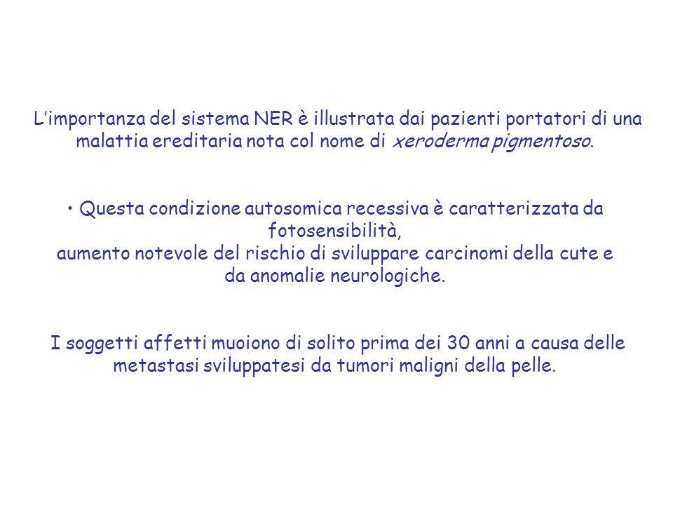 L'importanza del sistema NER è illustrata dai pazienti portatori di una malattia ereditaria nota col nome di xeroderma pigmentoso. Questa condizione a