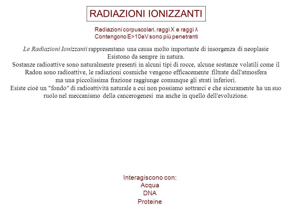 RADIAZIONI IONIZZANTI Radiazioni corpuscolari, raggi X e raggi λ Contengono E>10eV sono più penetranti Interagiscono con: Acqua DNA Proteine Le Radiaz