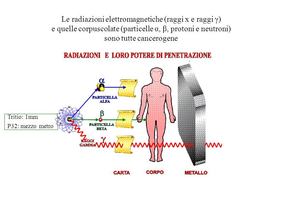 Le radiazioni elettromagnetiche (raggi x e raggi γ) e quelle corpuscolate (particelle α, β, protoni e neutroni) sono tutte cancerogene Tritio: 1mm P32
