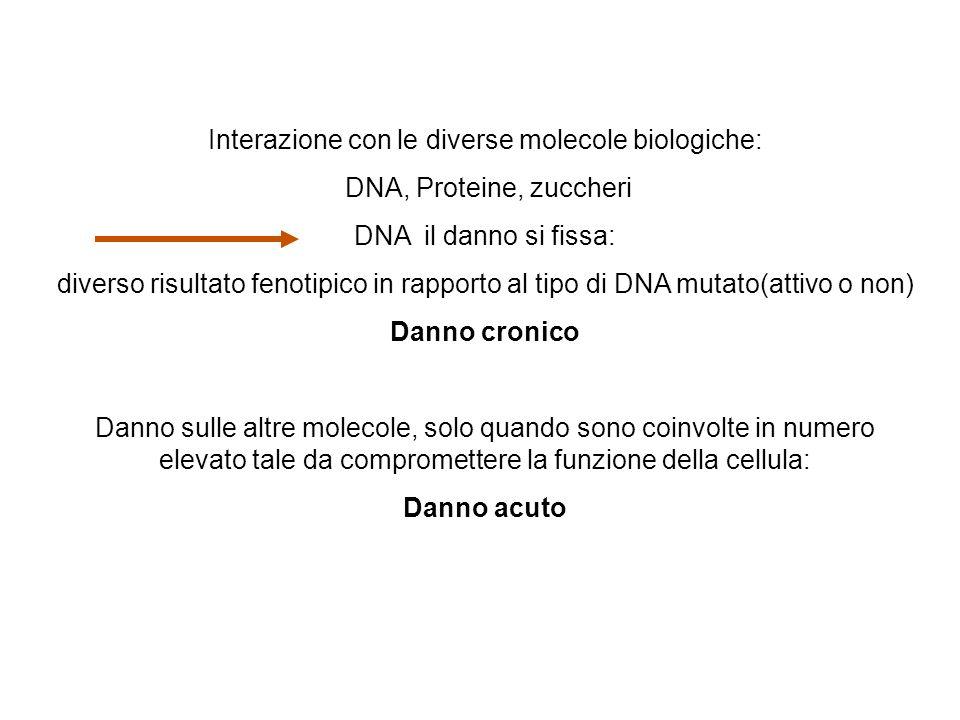 Interazione con le diverse molecole biologiche: DNA, Proteine, zuccheri DNA il danno si fissa: diverso risultato fenotipico in rapporto al tipo di DNA