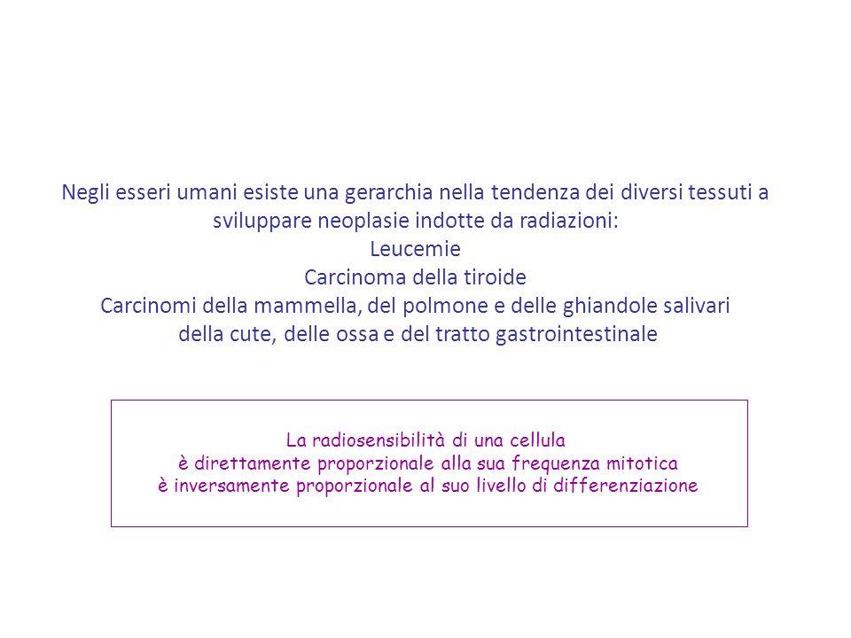Negli esseri umani esiste una gerarchia nella tendenza dei diversi tessuti a sviluppare neoplasie indotte da radiazioni: Leucemie Carcinoma della tiro