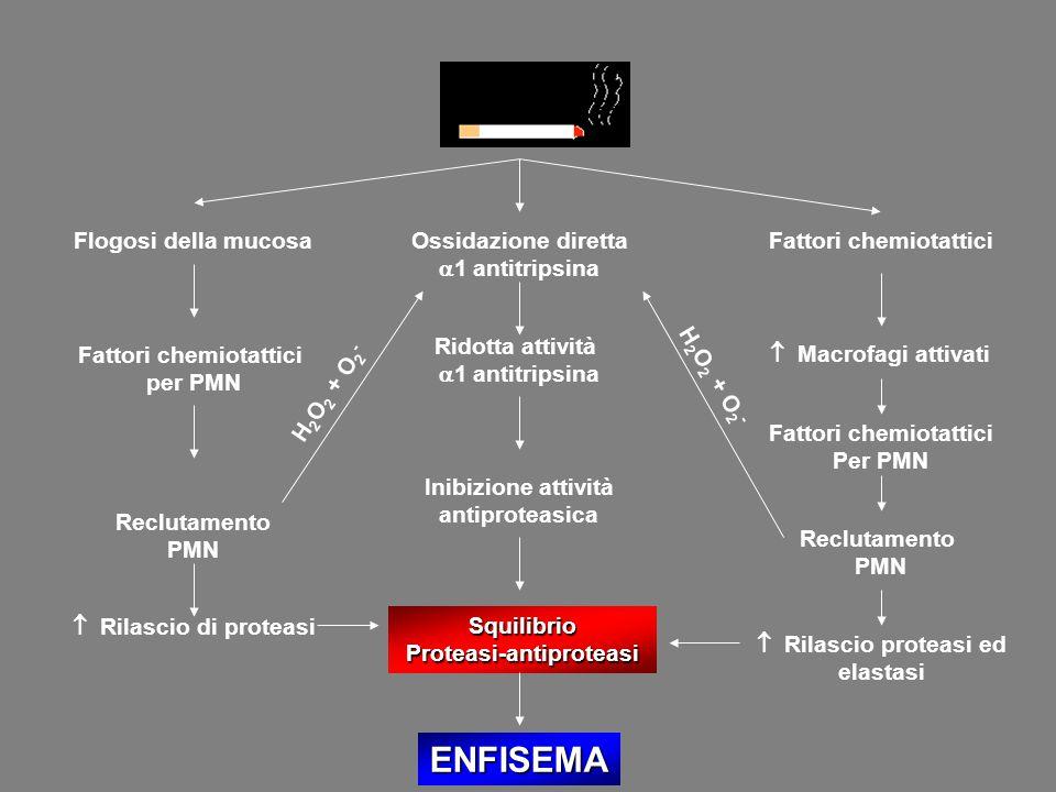 SquilibrioProteasi-antiproteasi ENFISEMA Ossidazione diretta  1 antitripsina Ridotta attività  1 antitripsina Inibizione attività antiproteasica Flo