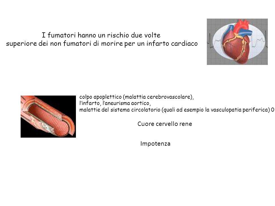 I fumatori hanno un rischio due volte superiore dei non fumatori di morire per un infarto cardiaco Cuore cervello rene Impotenza colpo apoplettico (ma