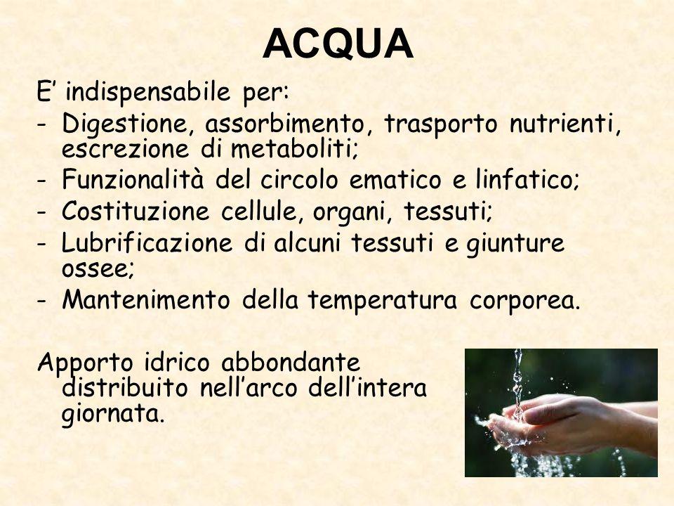 ACQUA E' indispensabile per: -Digestione, assorbimento, trasporto nutrienti, escrezione di metaboliti; -Funzionalità del circolo ematico e linfatico;