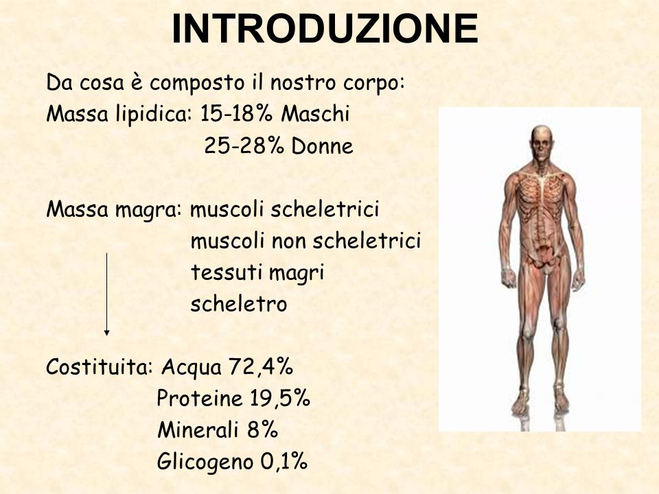 INTRODUZIONE Da cosa è composto il nostro corpo: Massa lipidica: 15-18% Maschi 25-28% Donne Massa magra: muscoli scheletrici muscoli non scheletrici t