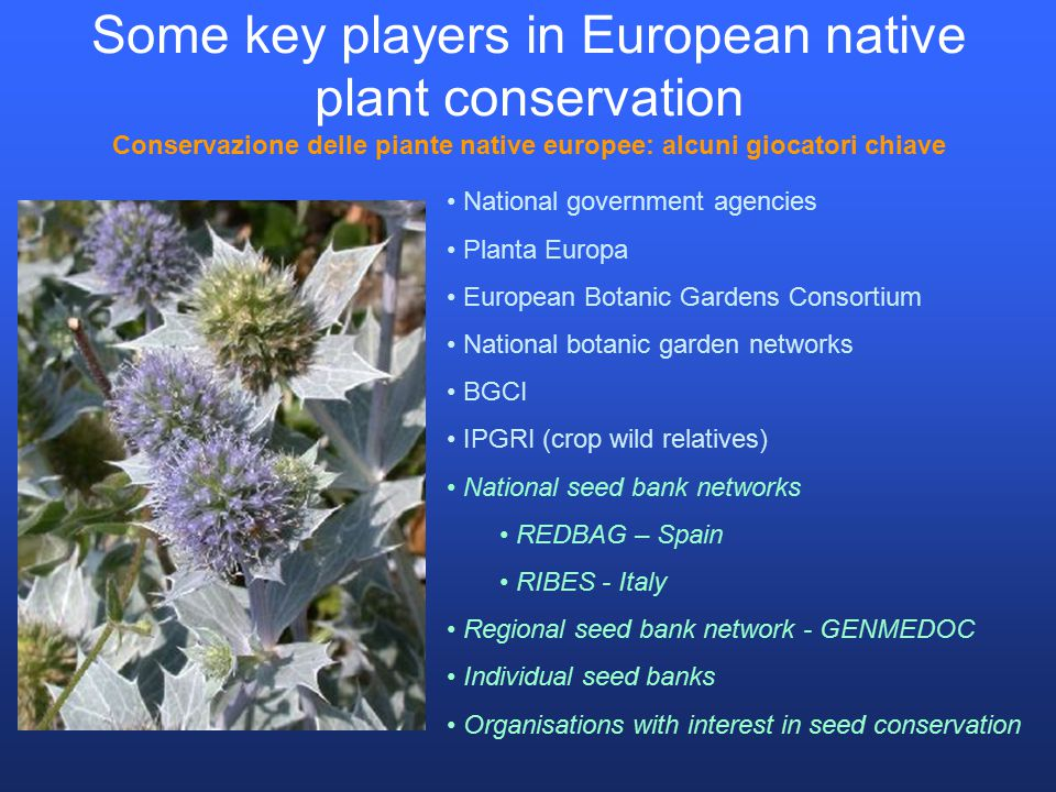 Some key players in European native plant conservation Conservazione delle piante native europee: alcuni giocatori chiave National government agencies Planta Europa European Botanic Gardens Consortium National botanic garden networks BGCI IPGRI (crop wild relatives) National seed bank networks REDBAG – Spain RIBES - Italy Regional seed bank network - GENMEDOC Individual seed banks Organisations with interest in seed conservation
