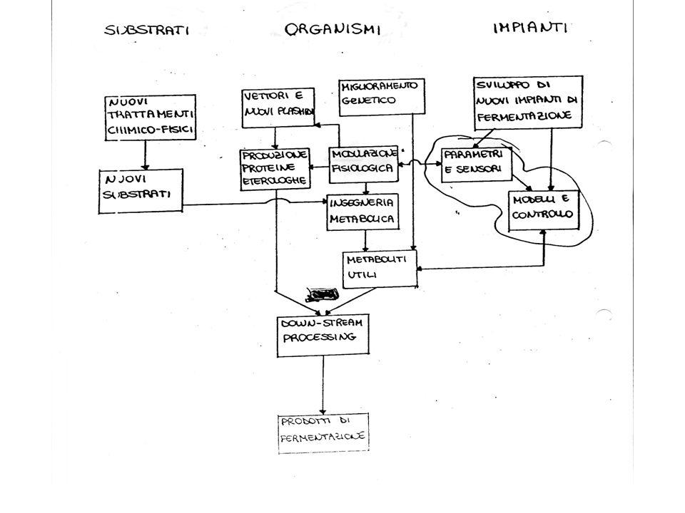NUOVA INGEGNERIA GENETICA (PRODUZIONE DI PROTEINE ETEROLOGHE) METABOLICA (> RESA DI CONVERSIONE) ENZIMATICA / PROTEICA DOWN STREAM PROCESSING (ELEVATA % SU COSTO TOTALE)