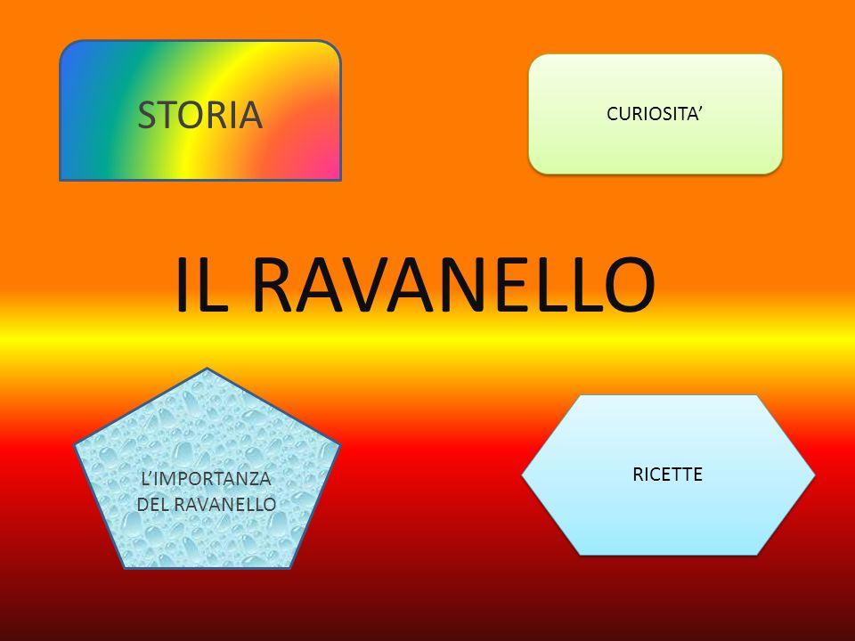 IL RAVANELLO CURIOSITA' RICETTE STORIA L'IMPORTANZA DEL RAVANELLO