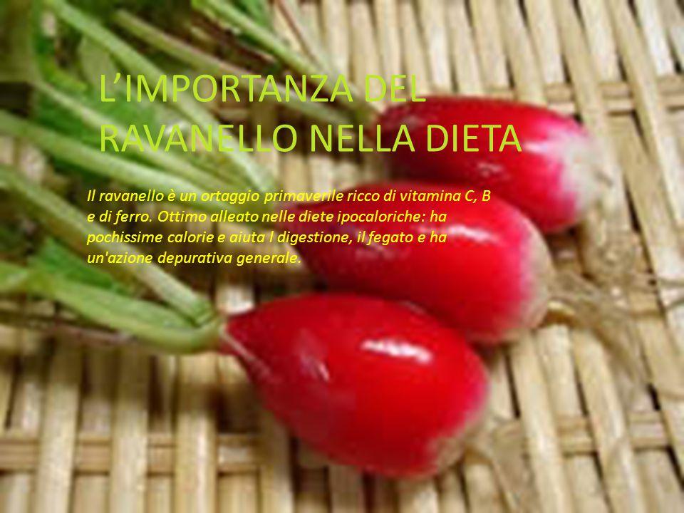 L'IMPORTANZA DEL RAVANELLO NELLA DIETA Il ravanello è un ortaggio primaverile ricco di vitamina C, B e di ferro. Ottimo alleato nelle diete ipocaloric