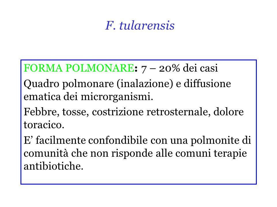 F. tularensis FORMA POLMONARE: 7 – 20% dei casi Quadro polmonare (inalazione) e diffusione ematica dei microrganismi. Febbre, tosse, costrizione retro