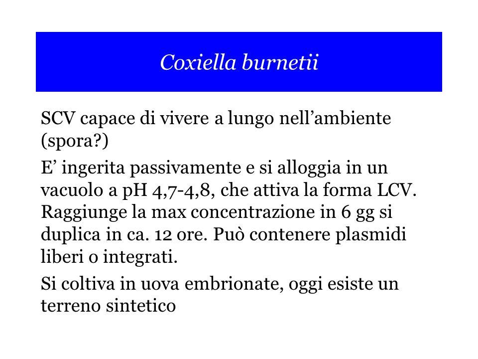 Coxiella burnetii SCV capace di vivere a lungo nell'ambiente (spora?) E' ingerita passivamente e si alloggia in un vacuolo a pH 4,7-4,8, che attiva la forma LCV.
