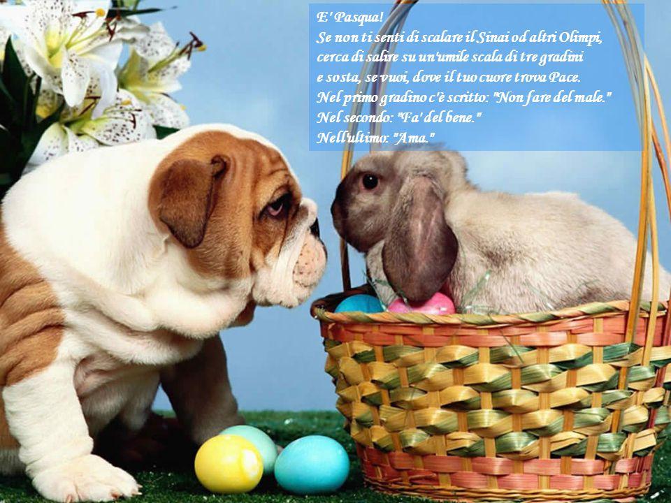 Pasqua è Pace Viene un suono da lontano lieve lieve, piano piano. Entra dolce in ogni cuore Come un dono del Signore. Tutti quanti son felici tutti qu