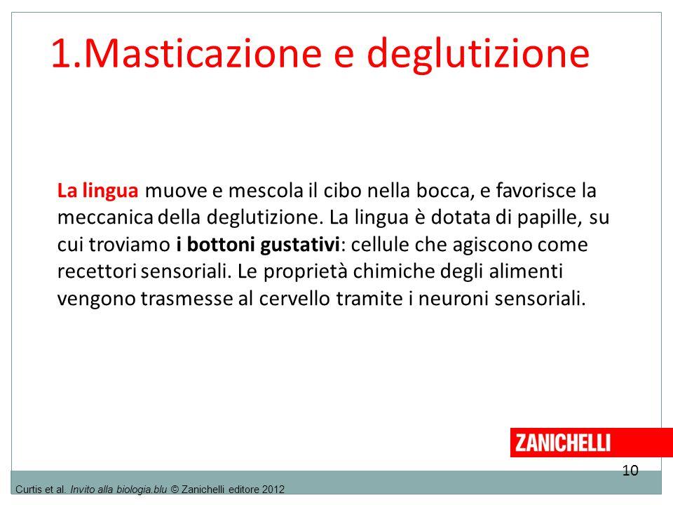 10 Curtis et al. Invito alla biologia.blu © Zanichelli editore 2012 1.Masticazione e deglutizione La lingua muove e mescola il cibo nella bocca, e fav