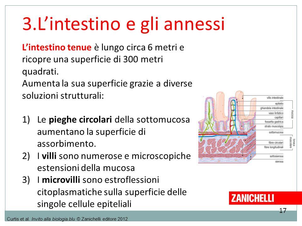 17 Curtis et al. Invito alla biologia.blu © Zanichelli editore 2012 3.L'intestino e gli annessi L'intestino tenue è lungo circa 6 metri e ricopre una