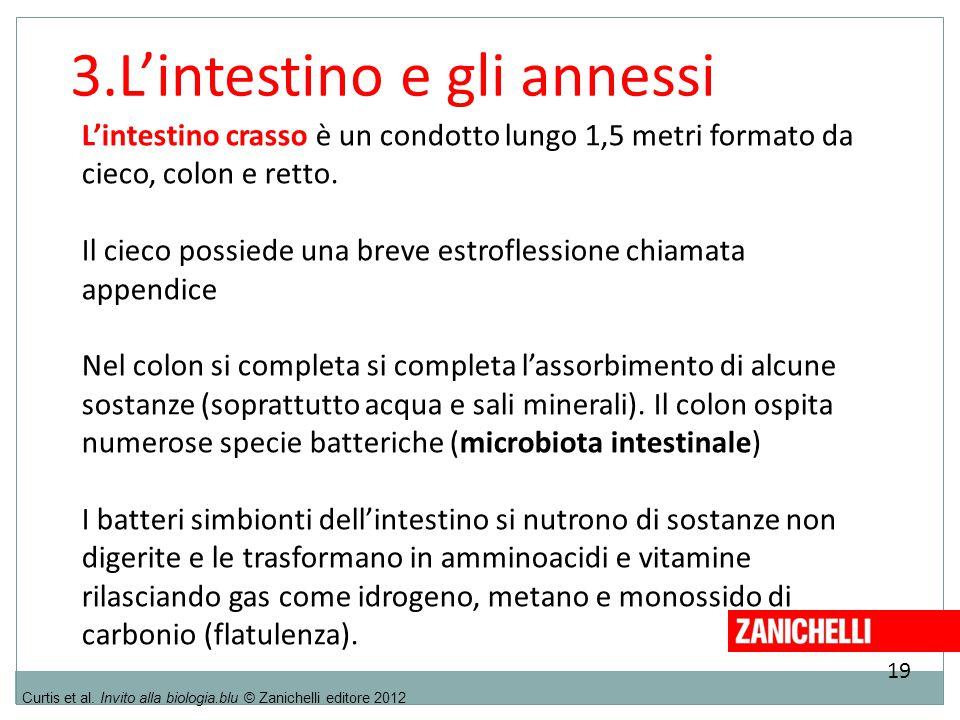 19 Curtis et al. Invito alla biologia.blu © Zanichelli editore 2012 3.L'intestino e gli annessi L'intestino crasso è un condotto lungo 1,5 metri forma