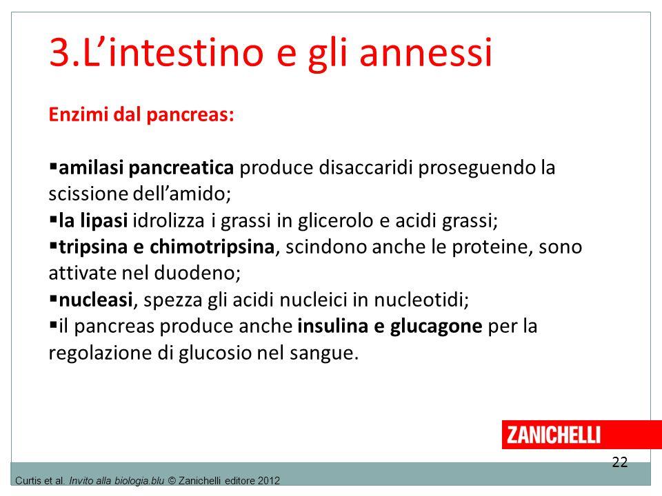 22 Curtis et al. Invito alla biologia.blu © Zanichelli editore 2012 3.L'intestino e gli annessi Enzimi dal pancreas:  amilasi pancreatica produce dis