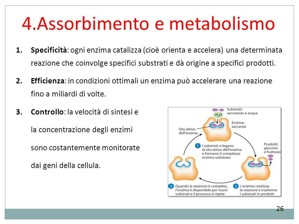 4.Assorbimento e metabolismo 26 1.Specificità: ogni enzima catalizza (cioè orienta e accelera) una determinata reazione che coinvolge specifici substr