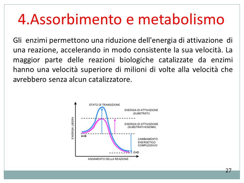 4.Assorbimento e metabolismo 27 Gli enzimi permettono una riduzione dell'energia di attivazione di una reazione, accelerando in modo consistente la su