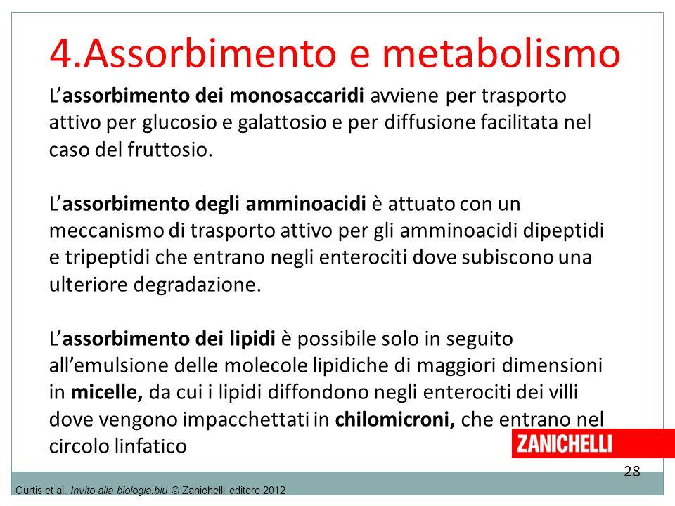 28 Curtis et al. Invito alla biologia.blu © Zanichelli editore 2012 4.Assorbimento e metabolismo L'assorbimento dei monosaccaridi avviene per trasport